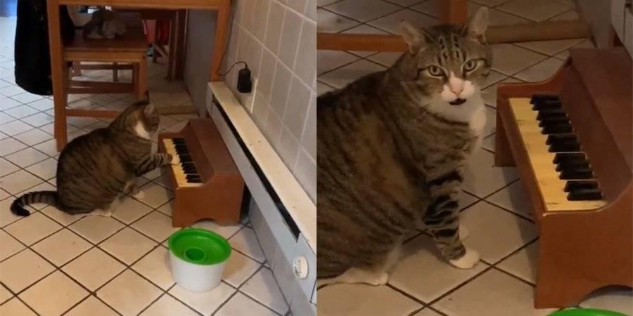 Как отучить кота орать без причины. как отучить кота орать: простые и эффективные методы