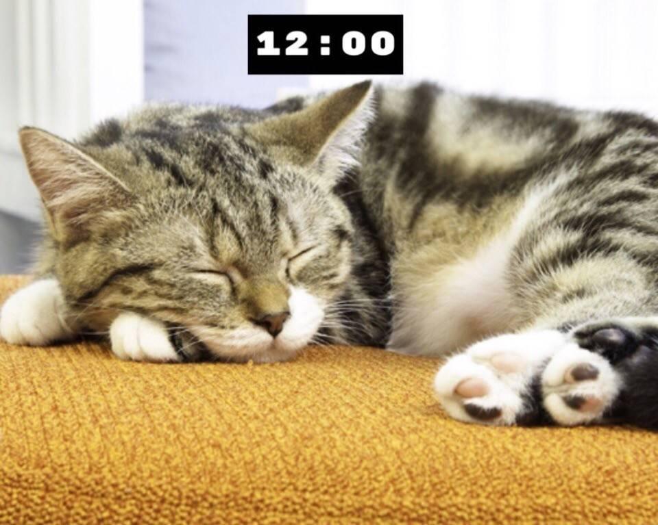 Кот сильно трясет ушами: причины и что делать | кот и кошка