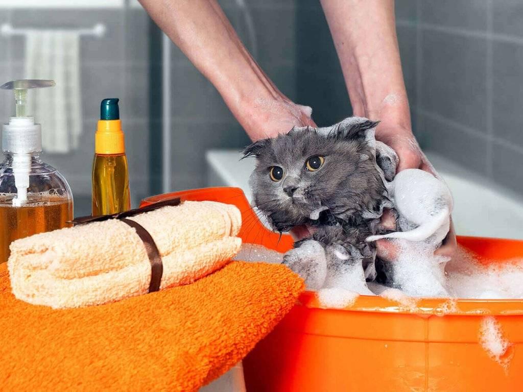 Можно ли мыть кошку обычным шампунем для людей, если нет специального?