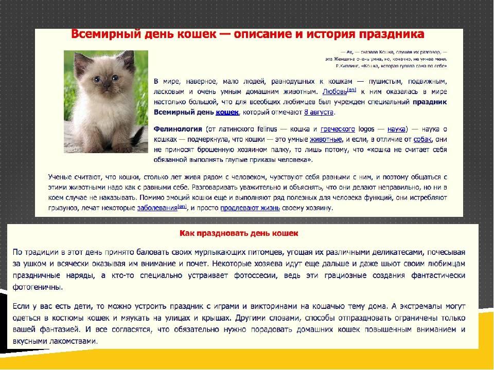 День кошек: интересные факты и самые известные коты в россии | новости