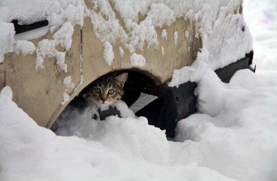 При какой температуре кошки могут жить на улице: какие породы не переносят холода
