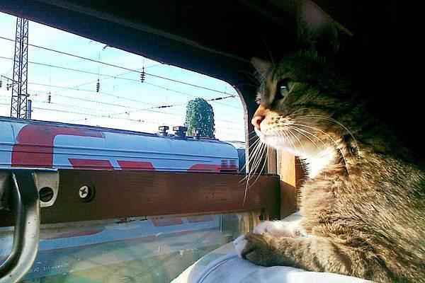 Правила перевозки кошек в поезде