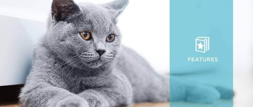 Тревожные симптомы и нормальное поведение у кошек