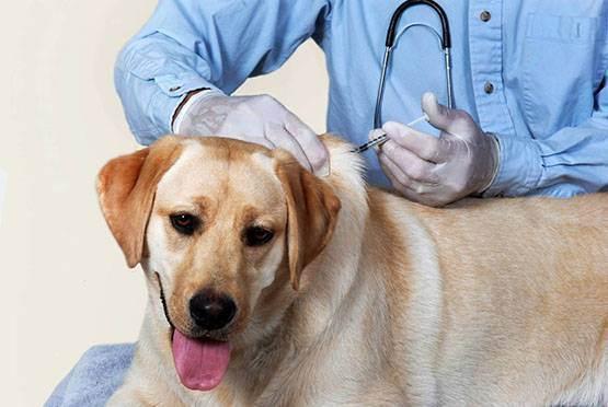 Обязательно ли делать прививки собакам