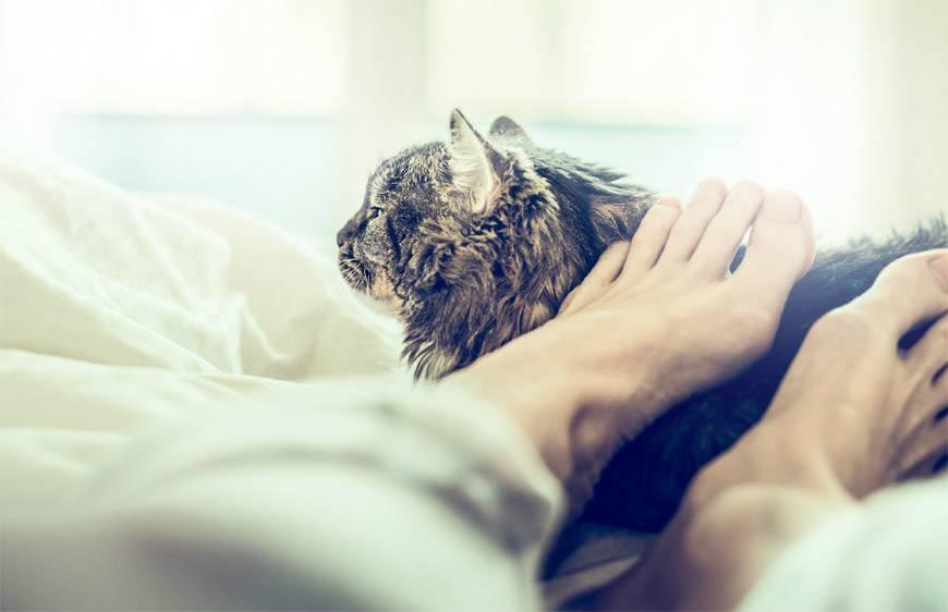 Почему кошки любят спать в ногах: что это значит почему кошки любят спать в ногах: что это значит