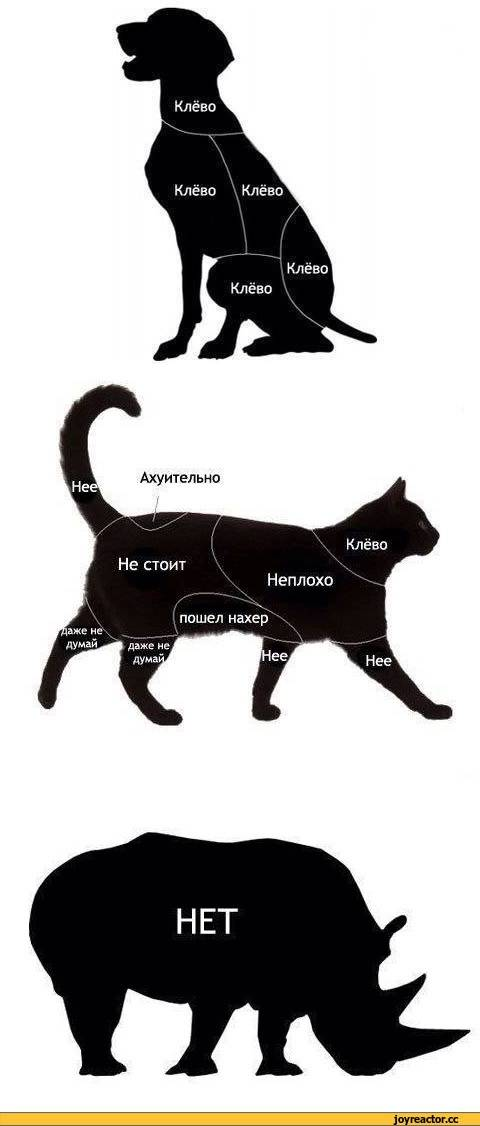 Как правильно гладить кота или кошку