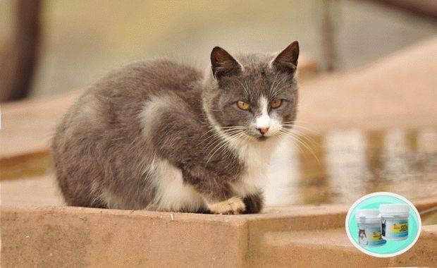 Диагностики и лечение лишая у кошки