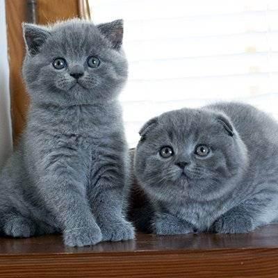 Выпадают ли молочные зубы у котов. у котенка режутся зубы: что надо делать и что не надо