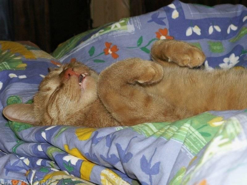 Кошка много спит – это нормально?