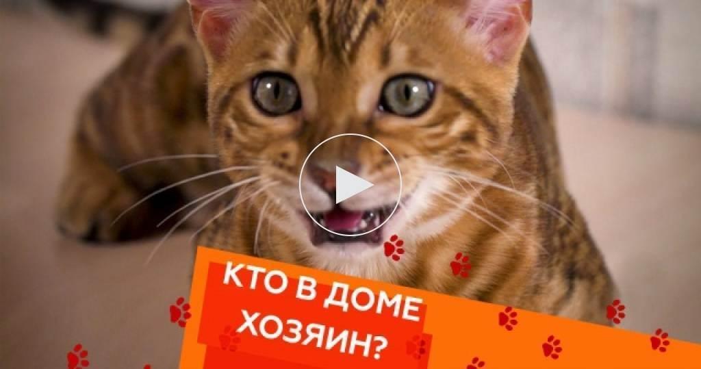 Как похудеть кошке?