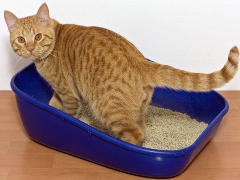 Чем кормить кошку после отравления: меню и рацион для реабилитации