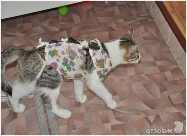 Как ухаживать за кошкой после стерилизации, что делать