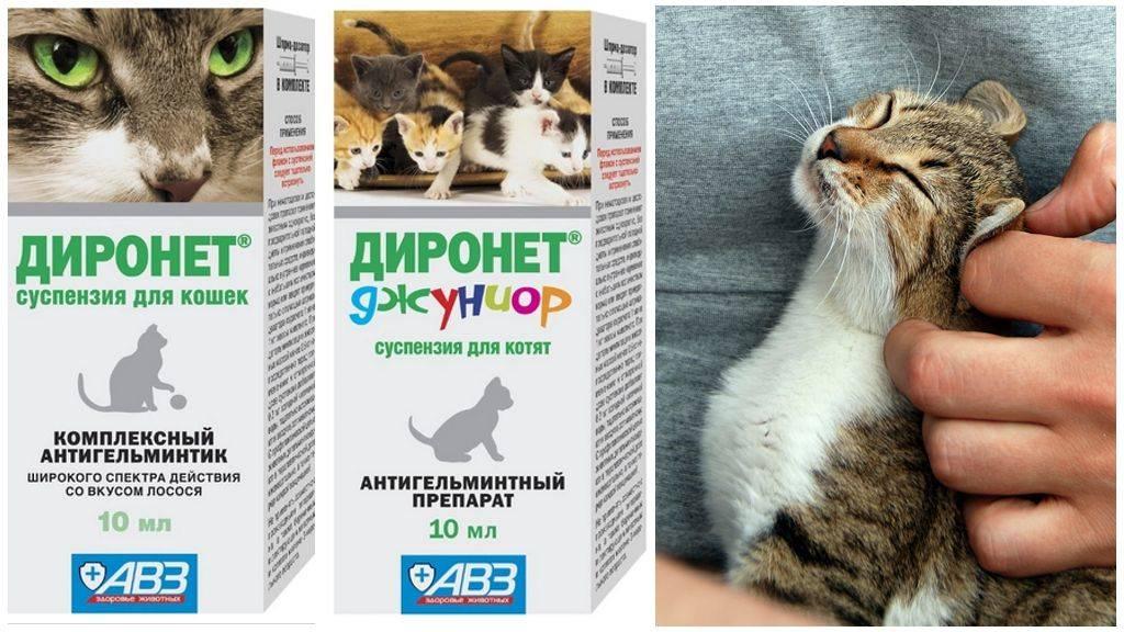 В каком возрасте глистогонят котят: схемы и рекомендации по дегельминтизации животных младшего возраста