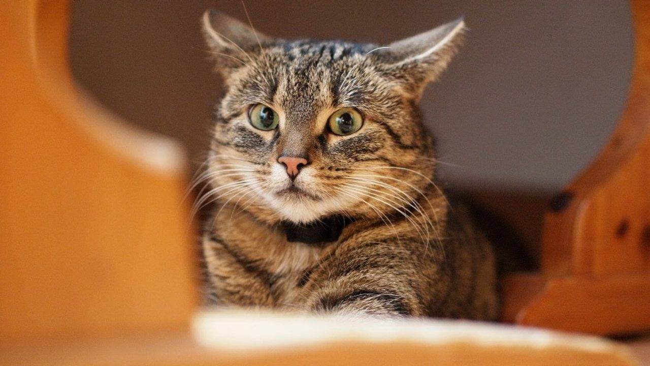 Как определить, что у вашей кошки депрессия - wikihow