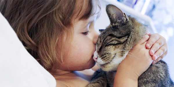 Чем можно заразиться от кошки человеку