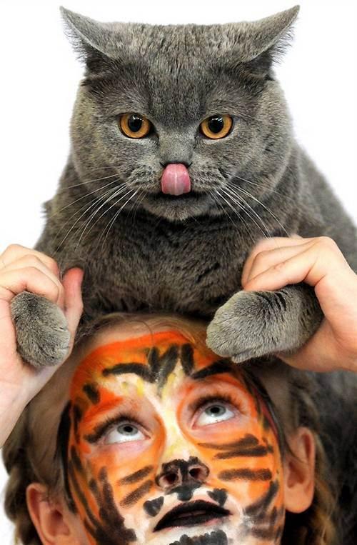 День выставки: регистрация, экспертиза, ринги - выставка кошек - всё о кошках и котах