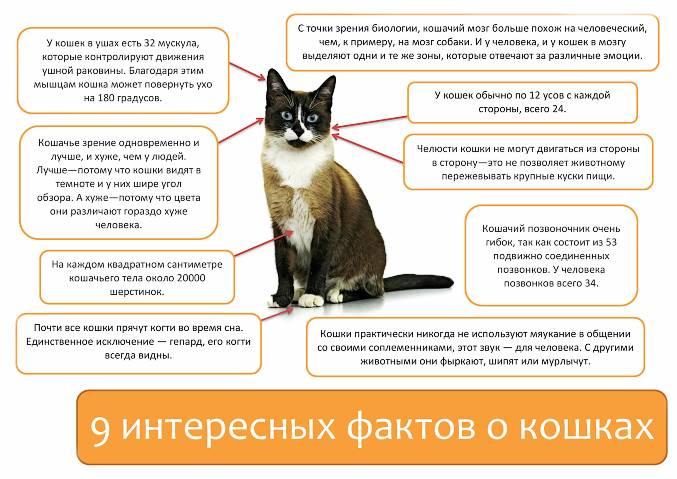 Как воспитывать котенка? | хиллс