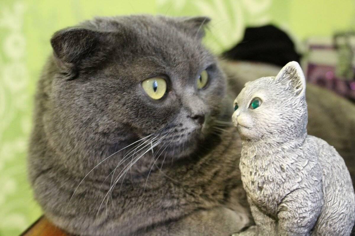 Кто лучше кот или собака? кого лучше завести: плюсы и минусы