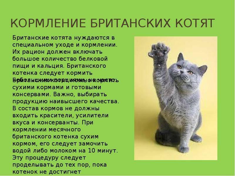 Чем кормить котенка: режим, норма и виды кормления