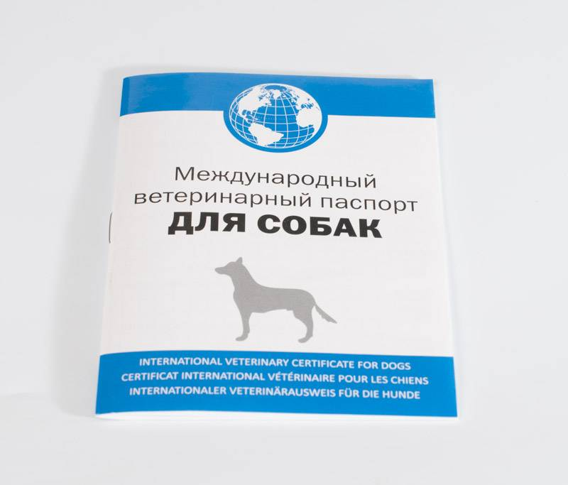 Как самостоятельно сделать паспорт кошке?