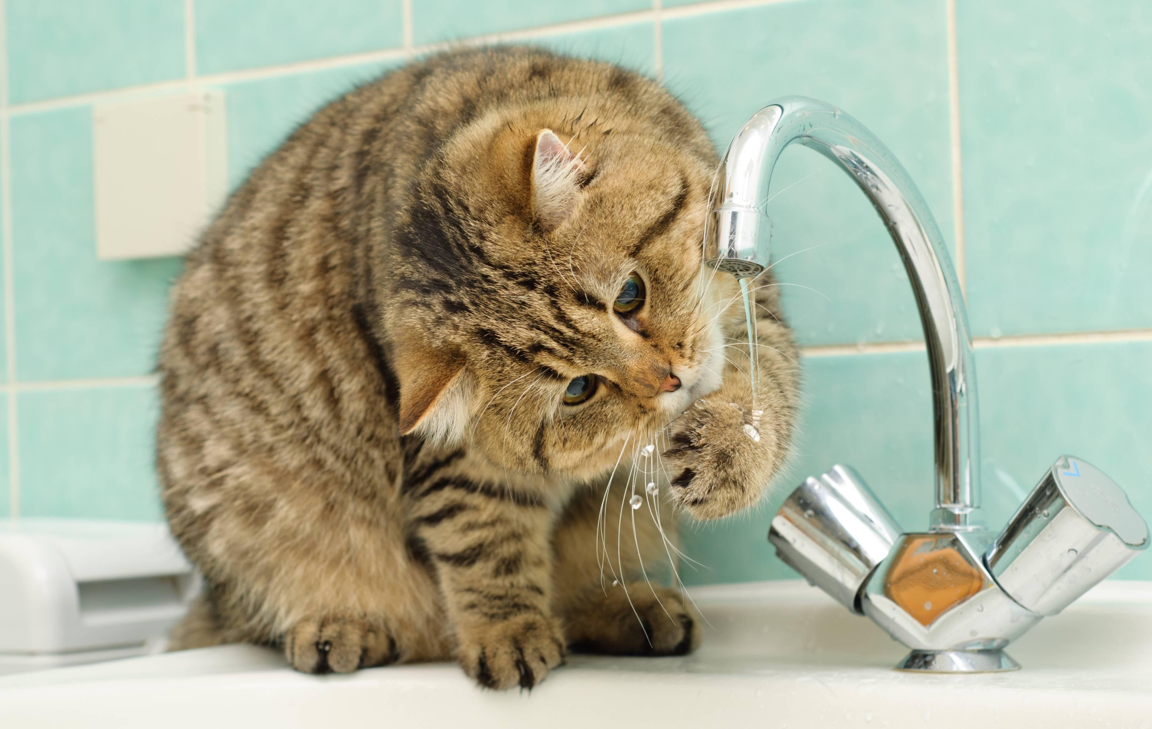 Что означает, когда кошка умывается черезчур усердно?