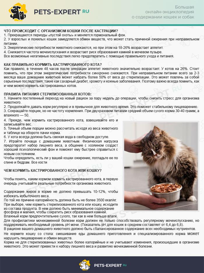 Чем кормить кастрированного кота