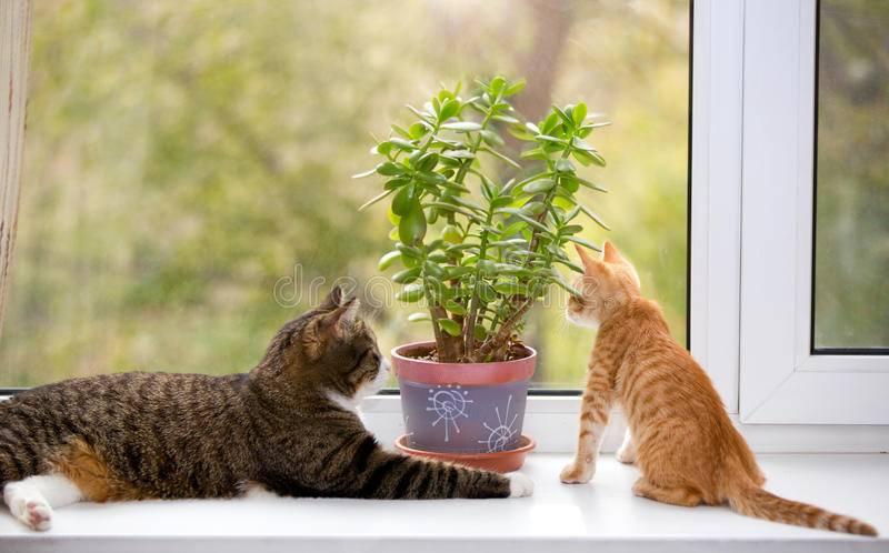 Кошка копает цветы. как отучить кошку копать цветы?