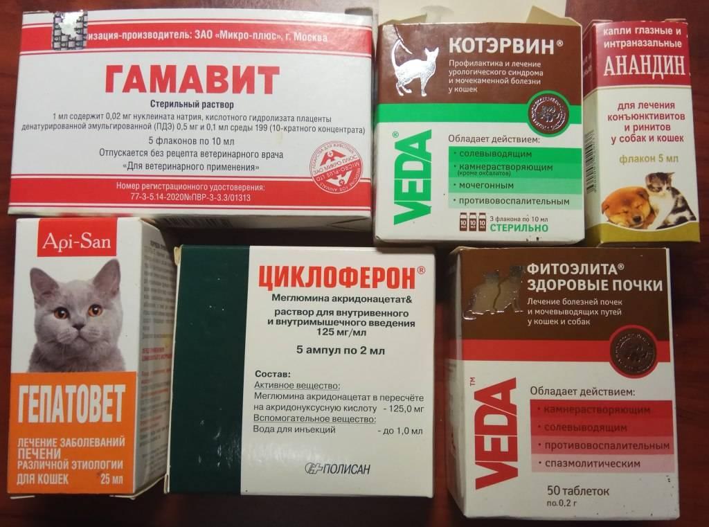 Как бороться с кошачьей мочекаменной болезнью?