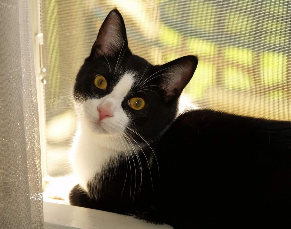 Какие кошки самые умные: топ-10 пород по интеллекту