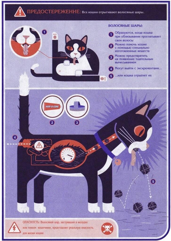 Шерсть в желудке у кота: симптомы, лечение, причины