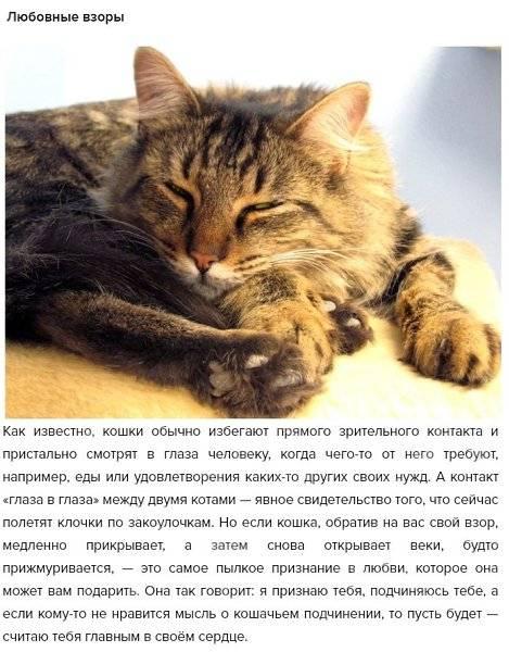 Как понять что кошка тебя любит как понять что кошка тебя любит