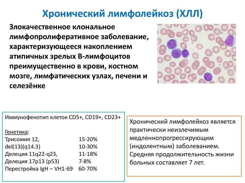 Рак кишечника у кошек: разновидности, симптомы, виды лечения