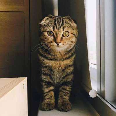 Почему у кошки висит живот?