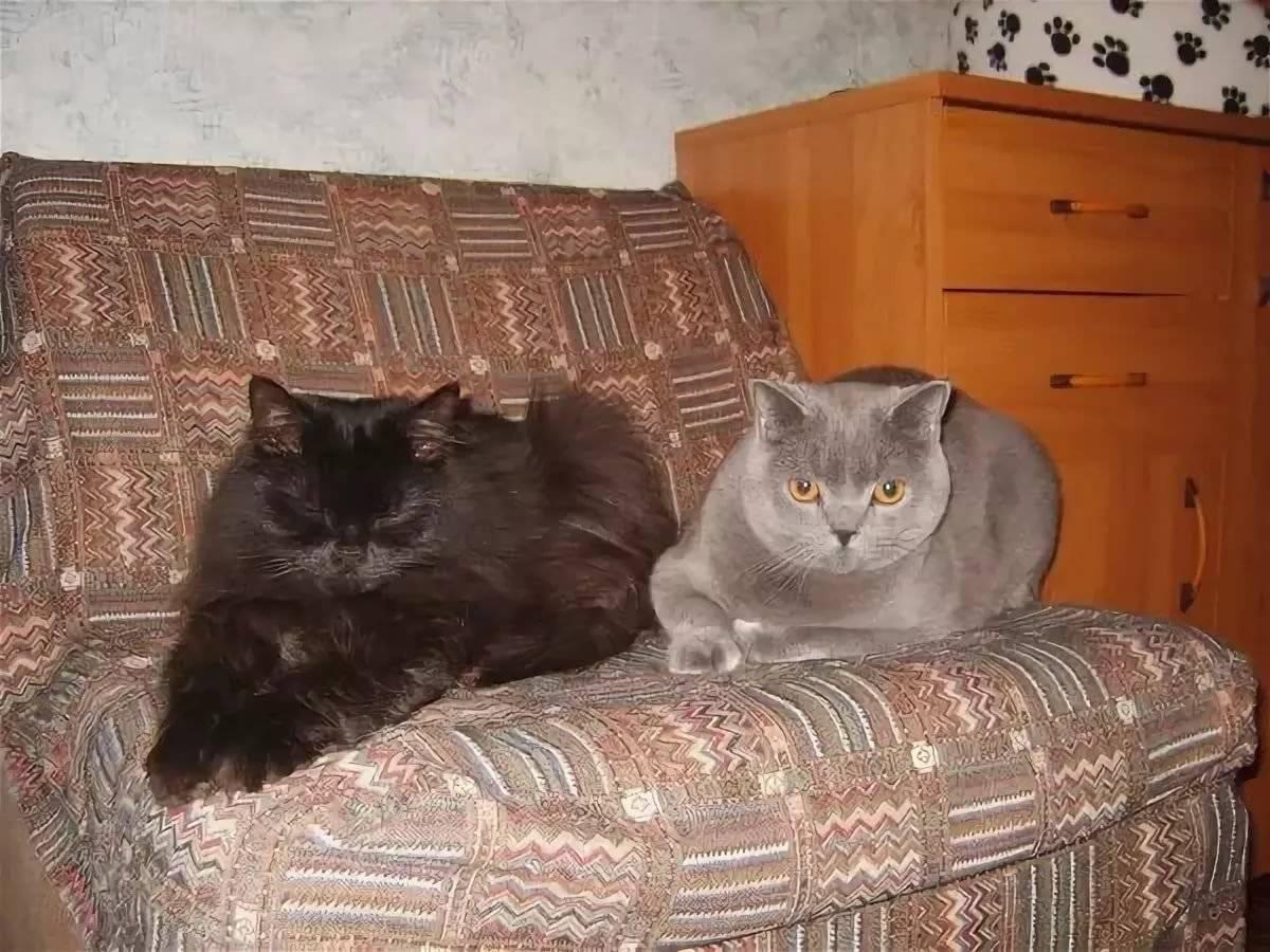 Как можно подружить кота и кошку?