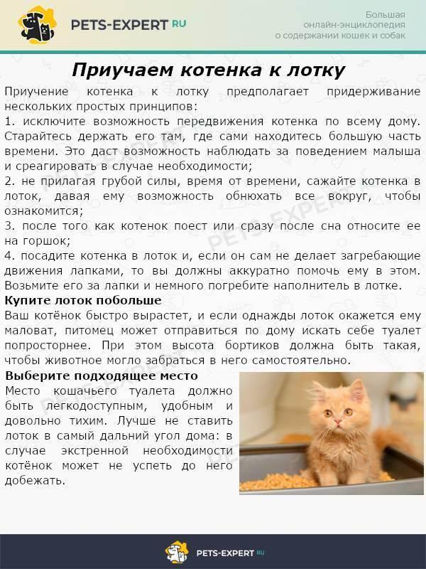 Способы приучить котенка к лотку в возрасте 2 месяца