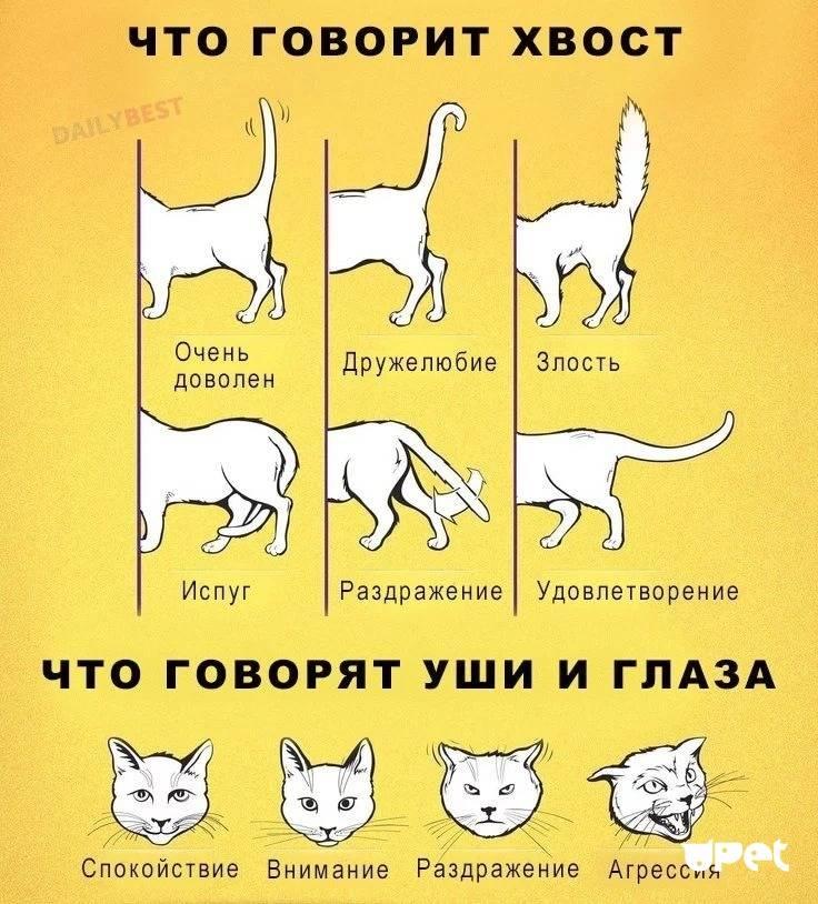 Понимают ли кошки человеческую речь: как происходит восприятие