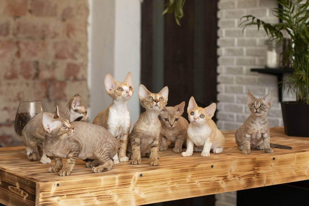 Кто такой фелинолог и почему так называется специалист по кошкам