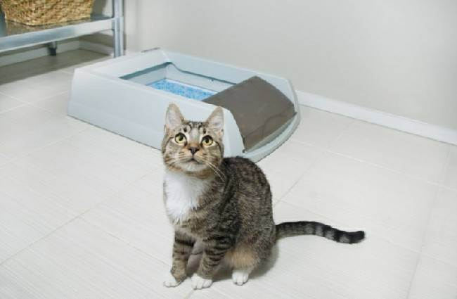 Если кошка перестала ходить в лоток: руководство к действию