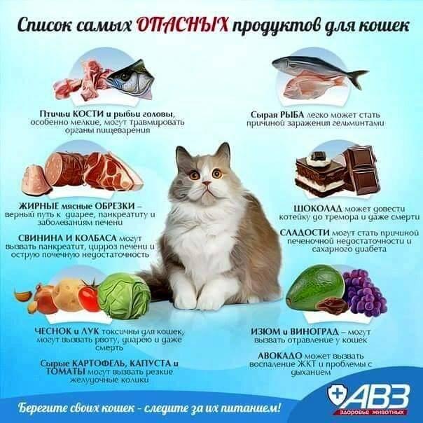 Можно ли кормить кошку кашей