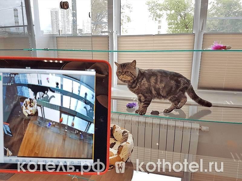 Гостиница для животных bookingcat