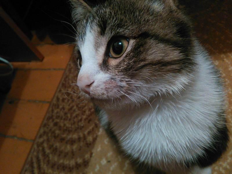 Почему у кота ломаются усы основные причины