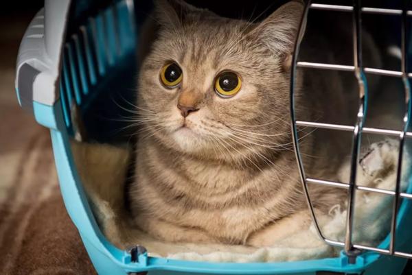 Как перевезти кошку на дальнее расстояние: что взять с собой и как успокоить питомца