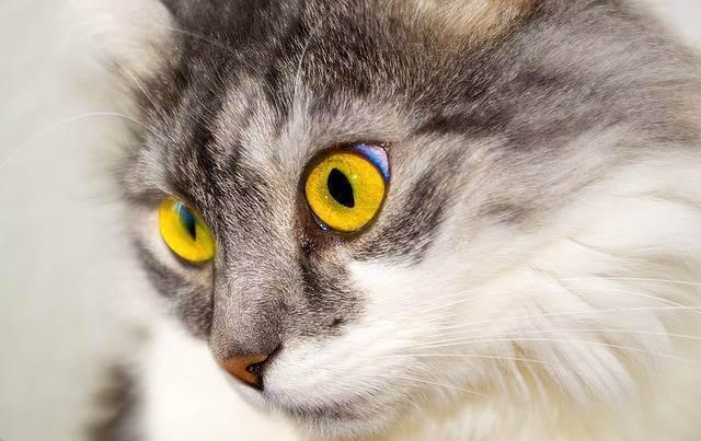 Кот расчесывает уши до крови чем лечить