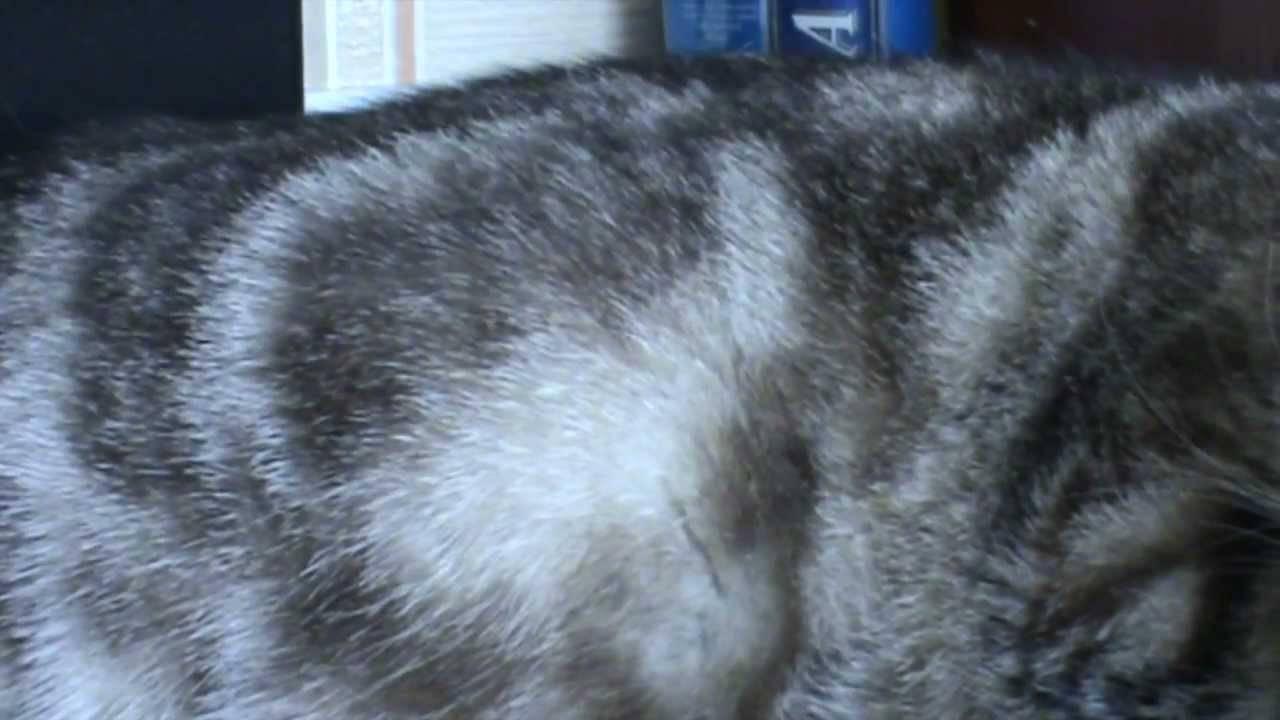 Когда у беременной кошки начинают шевелиться котята: жизнь в чреве
