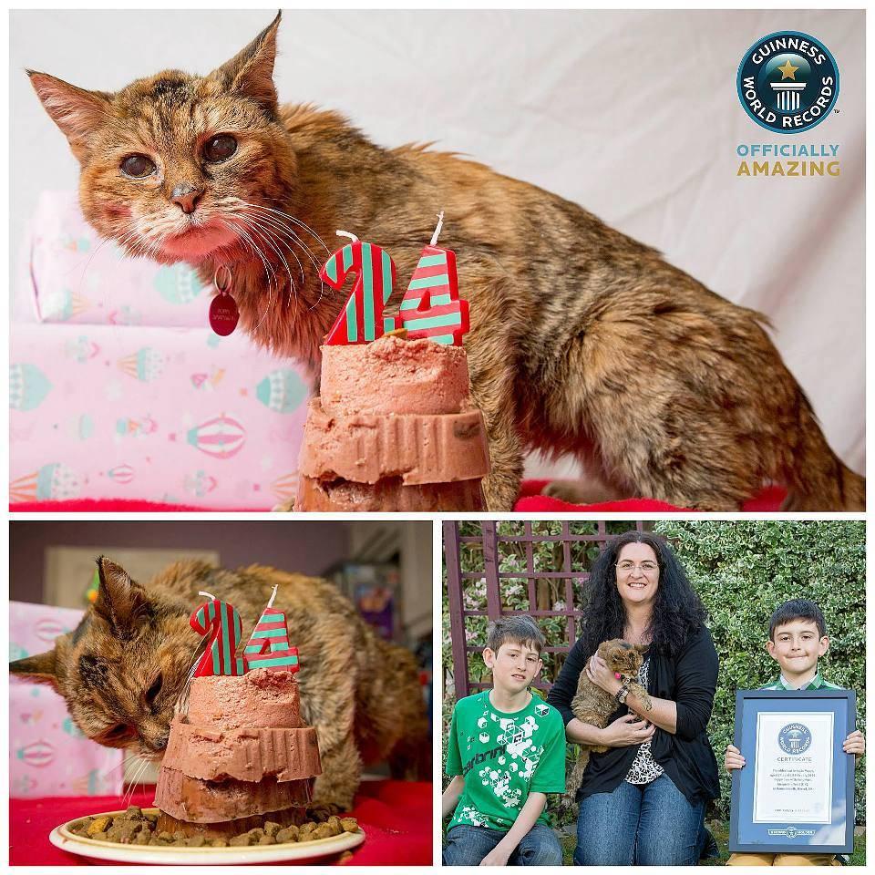 Самый старый кот в мире: коты долгожители