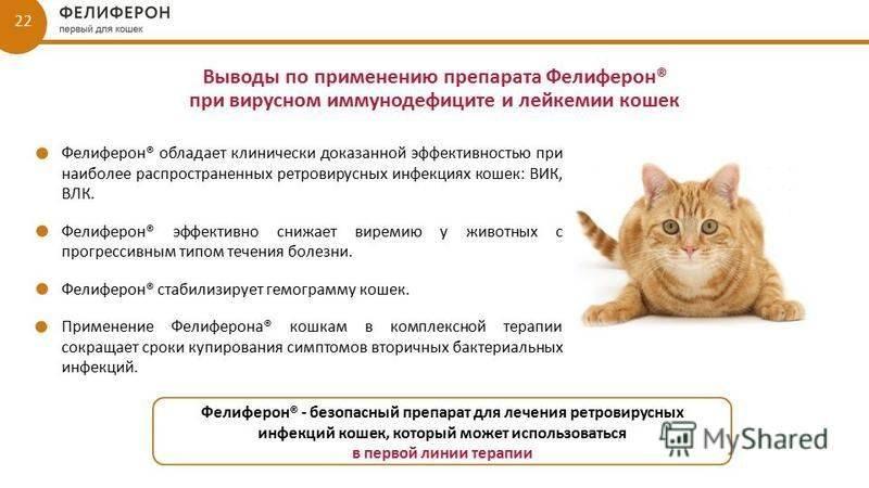 Лейкоз у кошек: симптомы и лечение, методы диагностики, прогноз, профилактика вирусной лейкемии