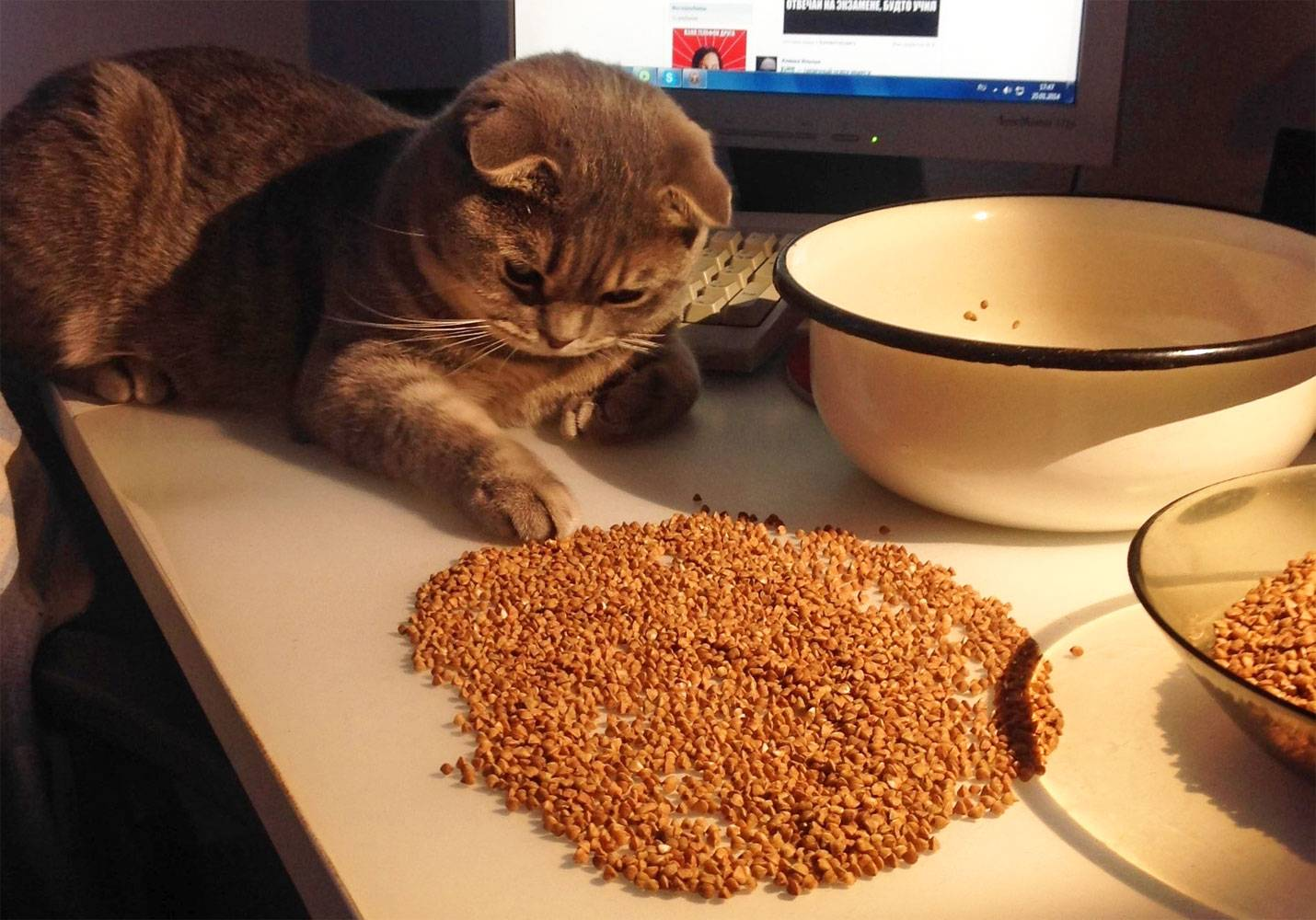 Можно ли кошке кашу