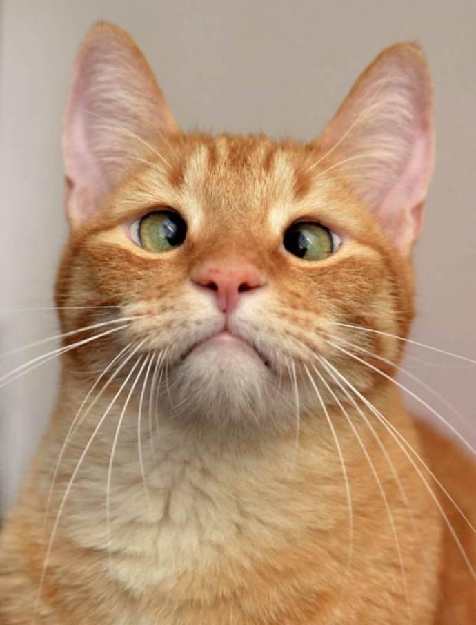 Кот с глазами в разные стороны, косая кошка