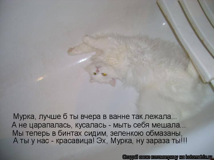Как помыть кота - в домашних условиях, если боится воды и царапается, первый раз