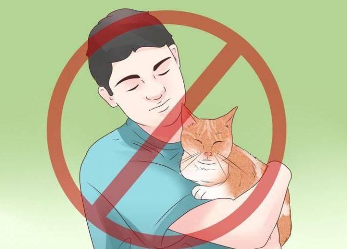 Эпилепсия у кошек: как прекратить приступы | симптомы, лечение, препараты